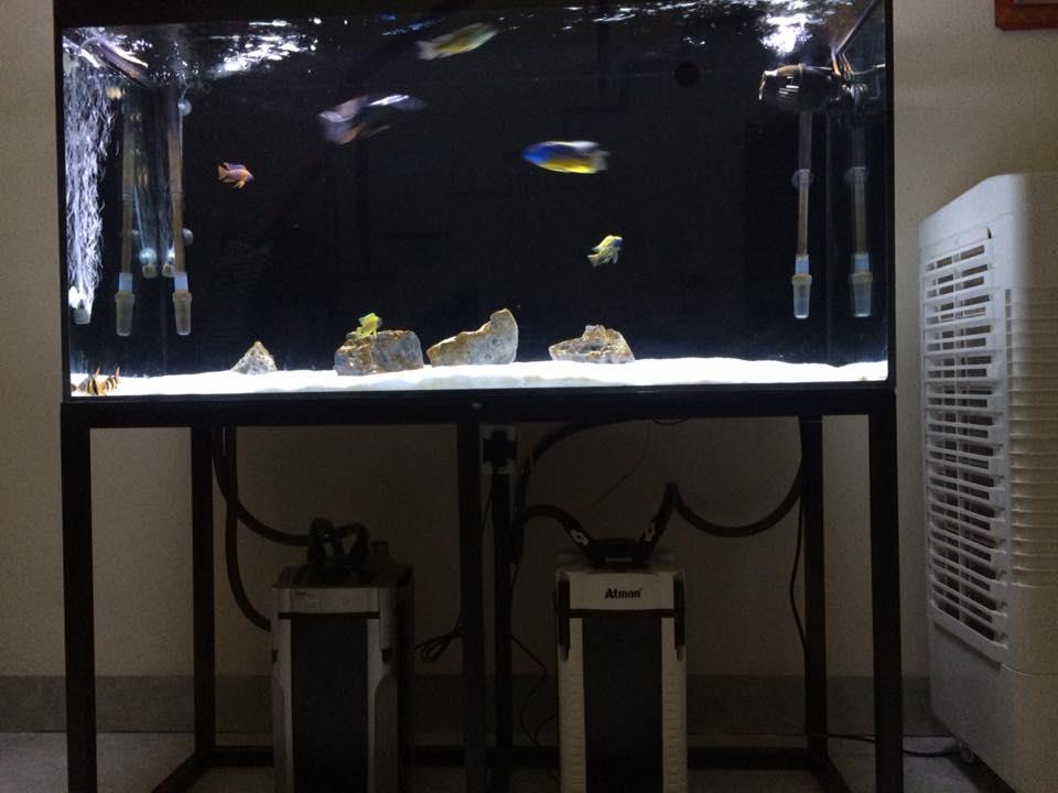 Một hồ thủy sinh trang bị 2 lọc thùng - one aquarium with 2 canister filters