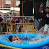 ¡Gallegos al agua! Las fiestas de Santiago ponen a remojo a niños y adultos