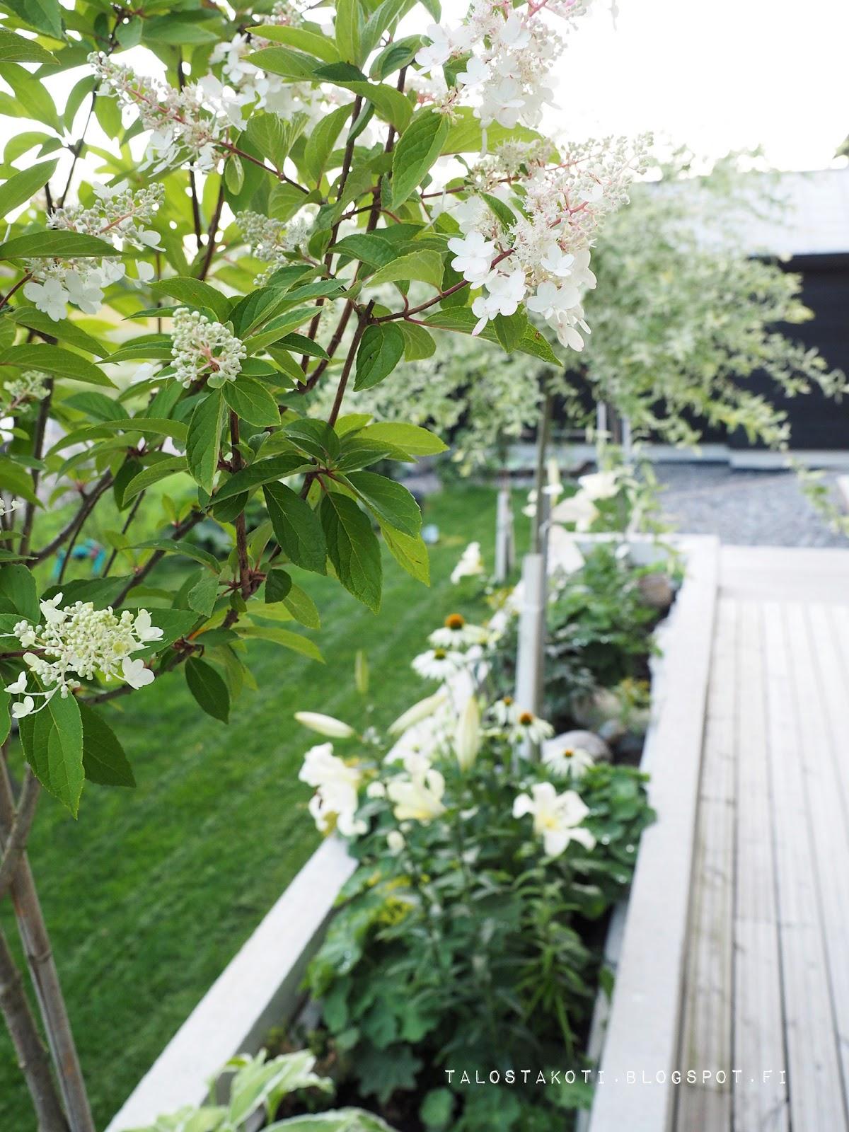 Kukkapenkki, betoniallas, istutusmuuri