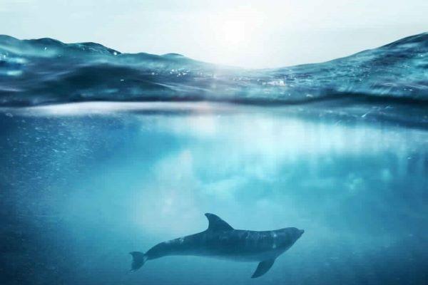 Underwater Wallpapers HD