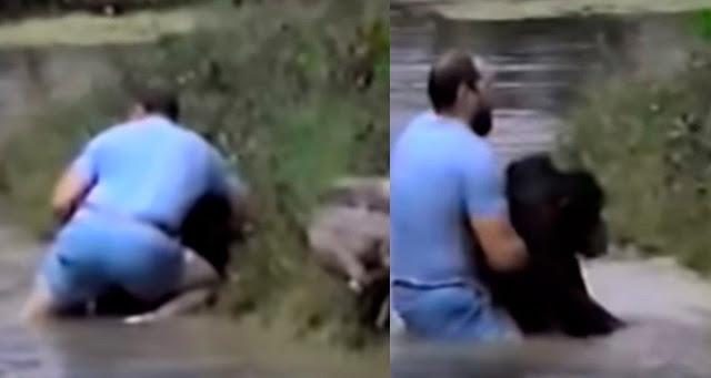 Мужчина бросается в воду, чтобы спасти обезьяну, поскольку работники зоопарка не хотят этого делать