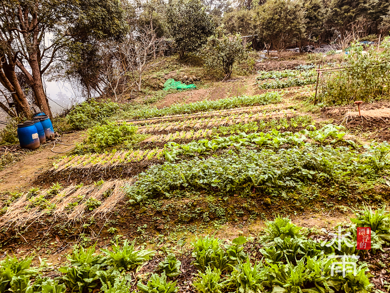 獅山古道|獅頭山風景區|菜園