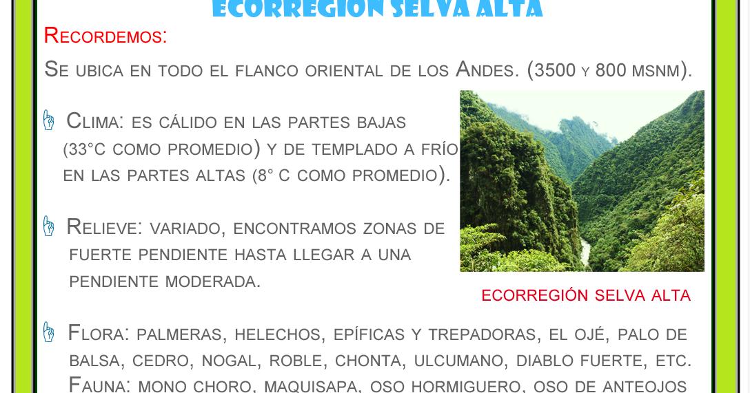Plantas De Selva Alta: Ecorregión Selva Alta