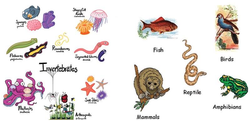 Jenis Hewan Vertebrata Dan Avertebrata Intan Nirmala Blog S Avertebrata Dan Vertebrata