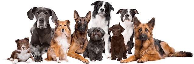 Brain Training Dogs