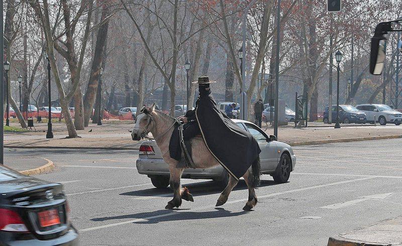 Zorro de Providencia