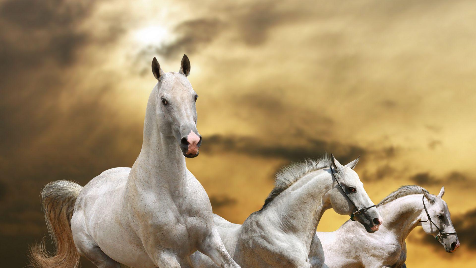 خيول جذابة