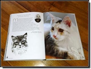 Vie quotidienne de FLaure : Une vie de chat - Albine NOVARINO-POTHIER