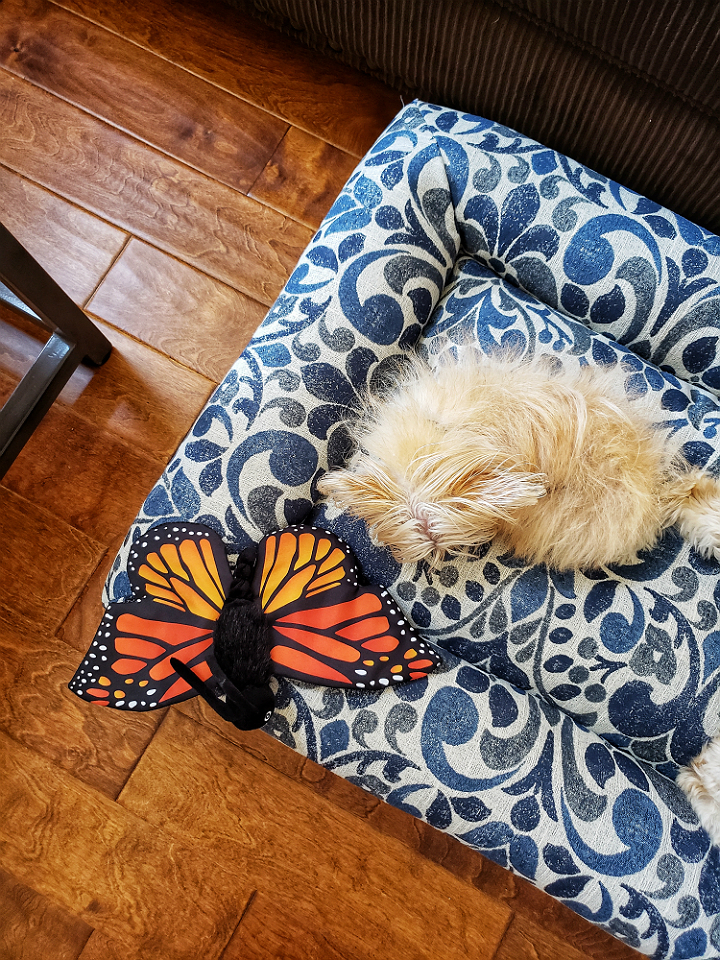#LZBPets Thoughtful Pet Beds With Decor And Comfort In Mind By La-Z Boy! #AD https://ooh.li/174bc6a