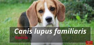 dog scientific name
