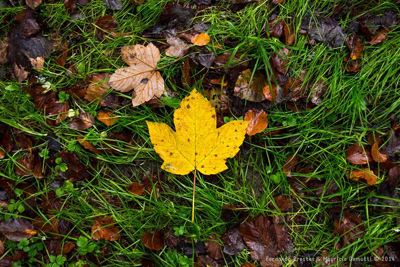 folha amarela no outono
