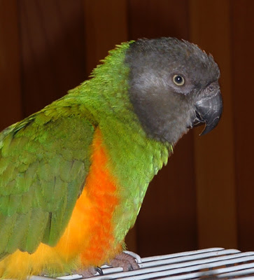 Cute Hope Wallpapers Hd Animals Small Parrots