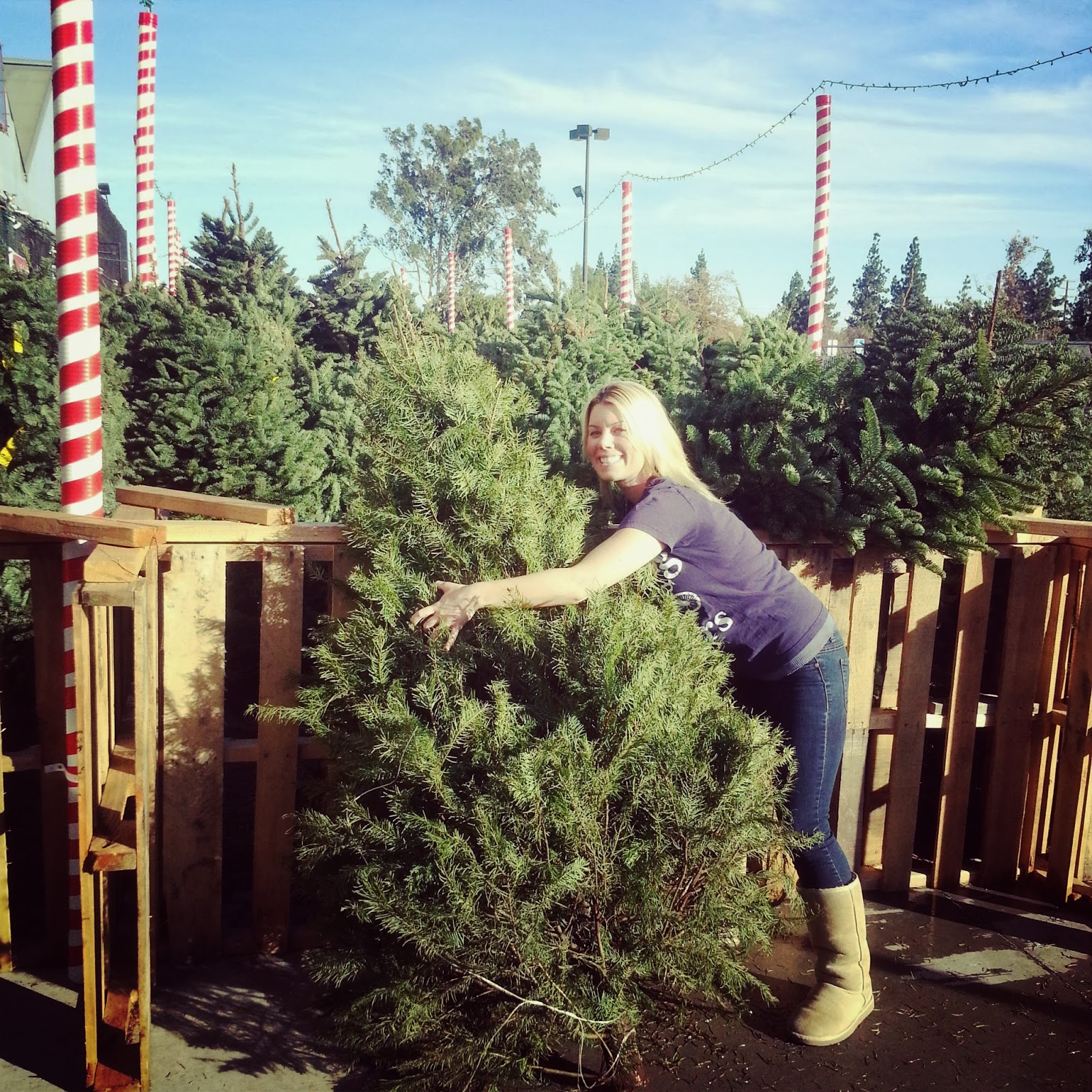 Real Christmas Trees Lowes: StarrJoy16: A Trip To Lowe's And A Christmas Tree