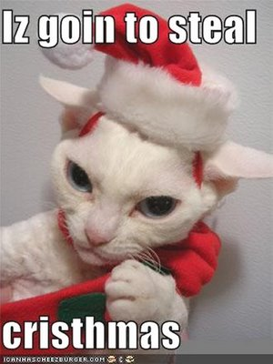 Christmas In July Cat Meme.Bibliophilia Please Christmas In July Giveaway Hop Int