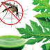 Kontroversi Papanaya Si Obat Penggugur Kandungan