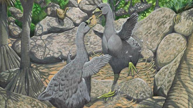 Mengenal Burung Raksasa Dodo Yang Punah Sejak Abad Ke 17 Banjir Embun