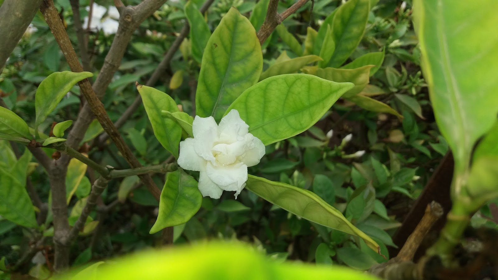 Natural photo bhavesh gadhavi bhavesh photography picbester animal blossom white flower with a shade of monsoon mightylinksfo