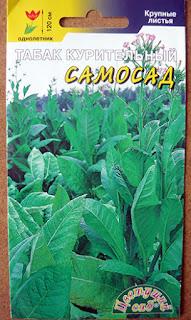 Выращивание табака на даче / Блог Дача-это просто!