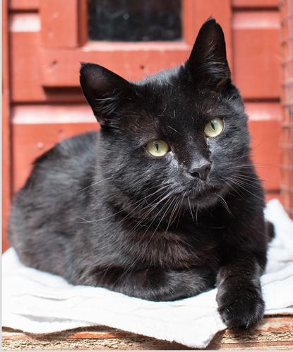black cat lying on blanket in front of red door