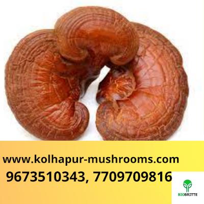 Top Mushroom Company