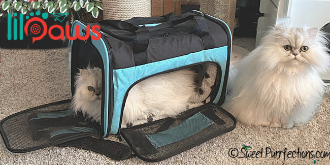 Two persian cats with Lil-Paws pet carrier (one inside and one outside)