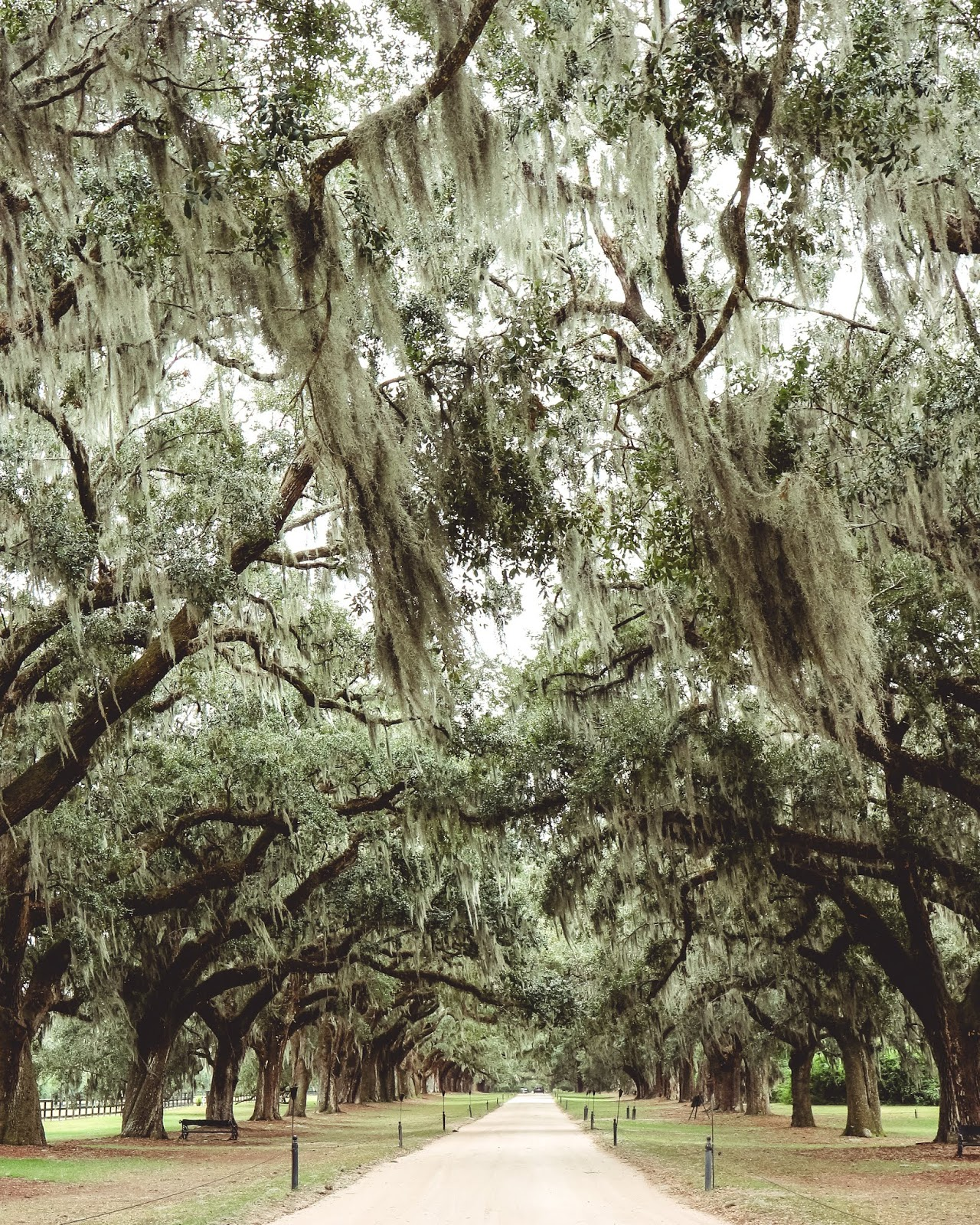 Thank You For 2018 - Boone Hall Plantation
