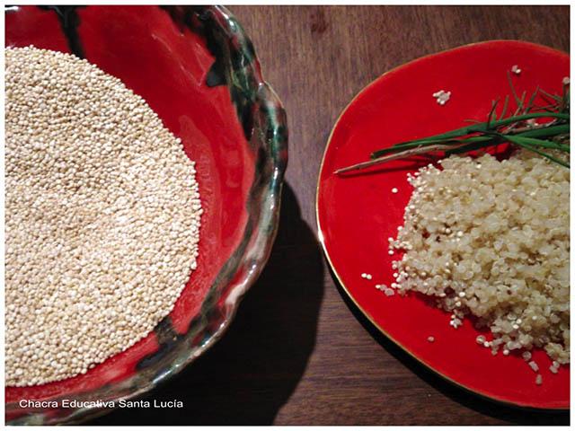 Quinoa-Chacra Educativa Santa Lucía