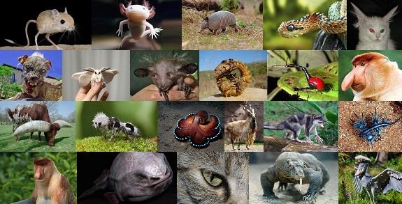 Hayvanlar Alemi Hakkında 100 İlginç Bilgi