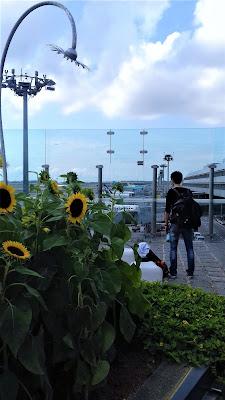 terrazza dei girasoli changi airport singapore