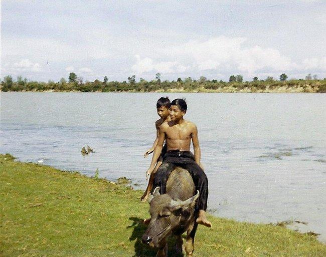 Подростки едут на буйволе