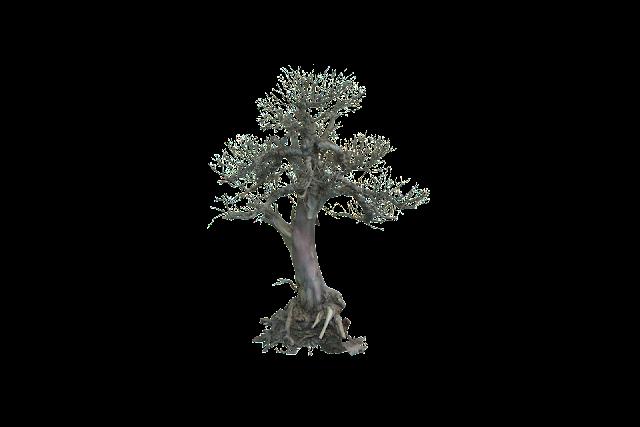 DEATH TREE 002