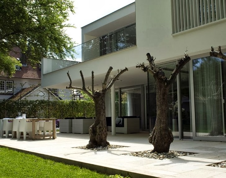Trees on the terrace of Modern home by Clijsters Architectuur Studio