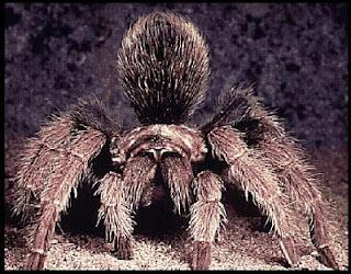 Pengertian Ciri Ciri Dan Klasifikasi Arthropoda Taufan Prihantoro