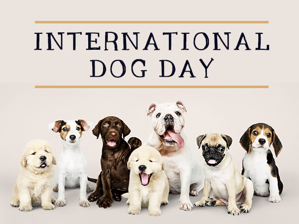 International Dog Day 2021: Best Dog Breeds You Can Adopt Today