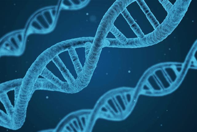Pengertian Rekayasa Genetika