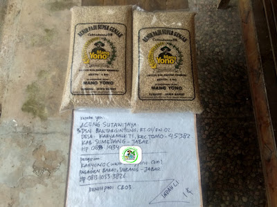Benih Padi yang dibeli    ACENG SUTAWIJAYA Sumedang, Jabar.    (Sebelum packing karung).