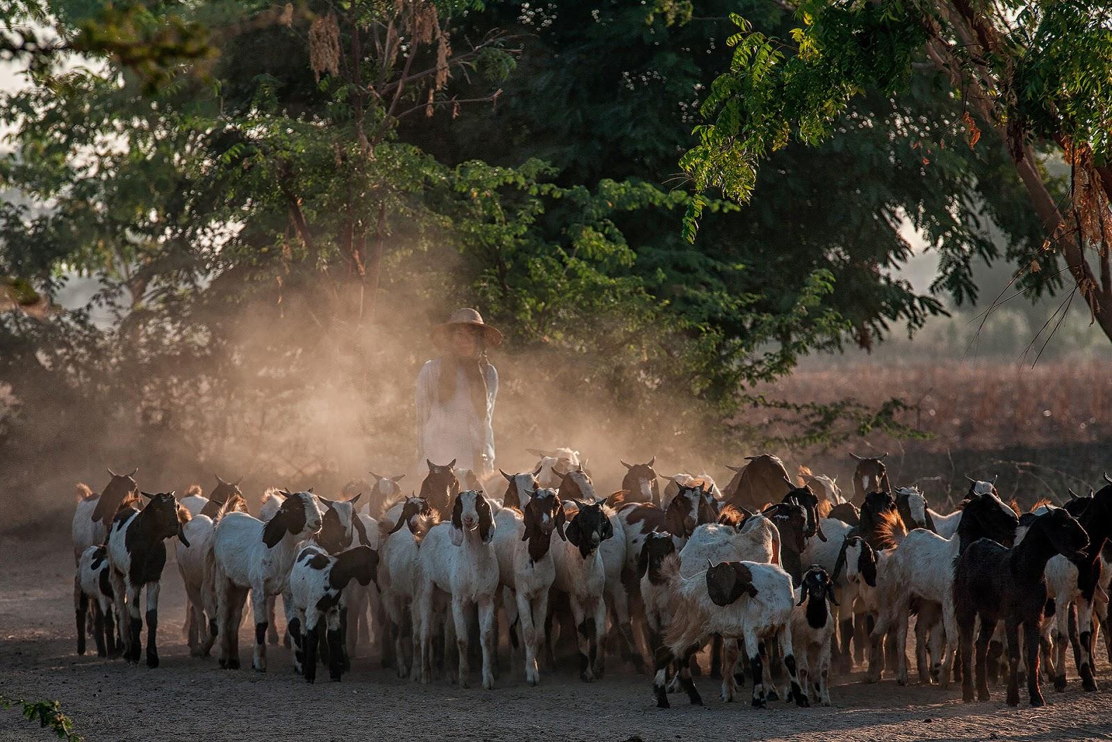 kozy,ludzie ,droga,kurz,bagan,birma