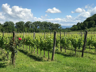 Cru Colli orientali friuli vino