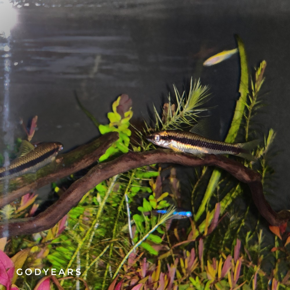 Have You Seen Fishes Sleeping on Branches?
