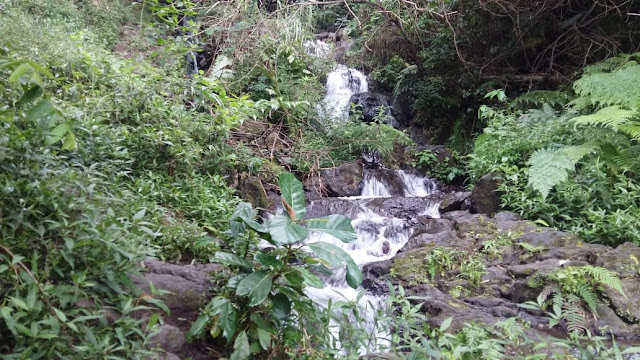 Sumber air di gunung guntur