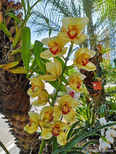 Orchids on Trees III