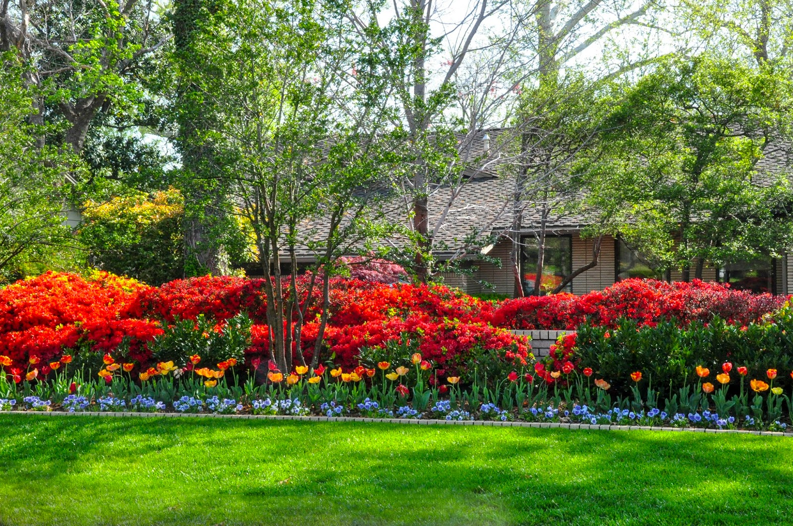 Ask A Master Gardener Pruning Azaleas And Other Shrubs