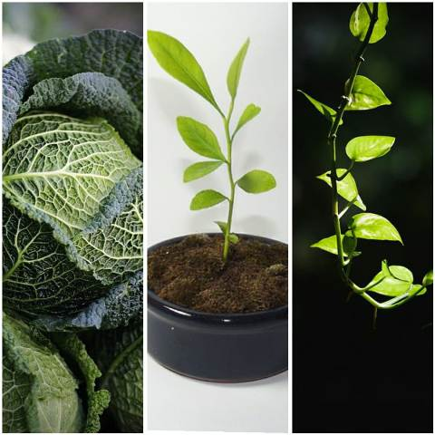 Vegetables and plants that can grow in our home garden