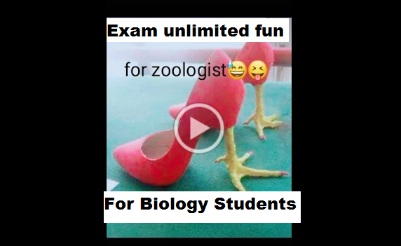 exam funny whatsapp status video download