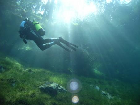 Yeşil Göl Parkı Avusturya Dalgıç