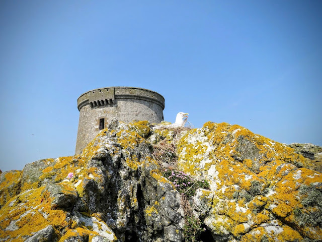 Day trip to Ireland's Eye Island - seagull and Martello Tower
