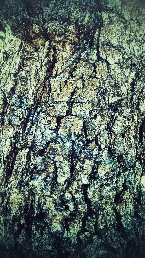 Edited Potutakawa tree bark as used for Treebeard in the Lord Of The Rings moviea