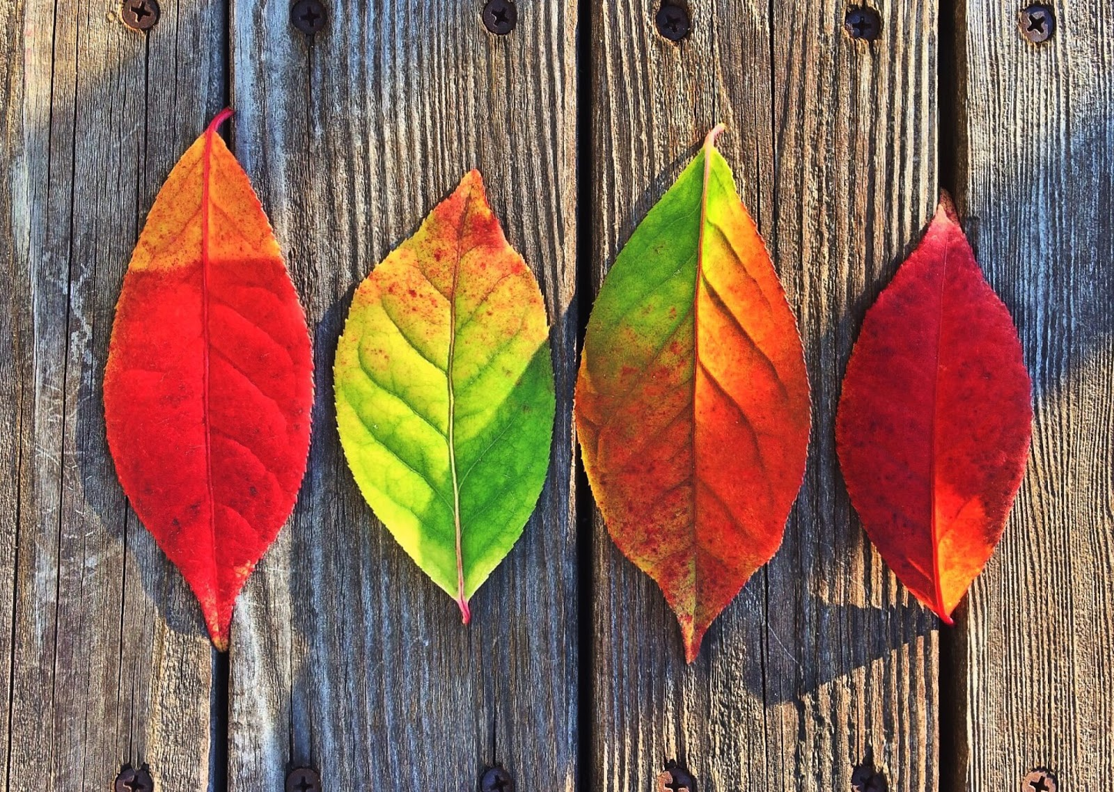 Leaves Fall Colors Rainbow On Wood