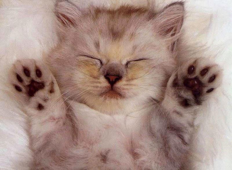 clásicas posturas de gatos durmiendo