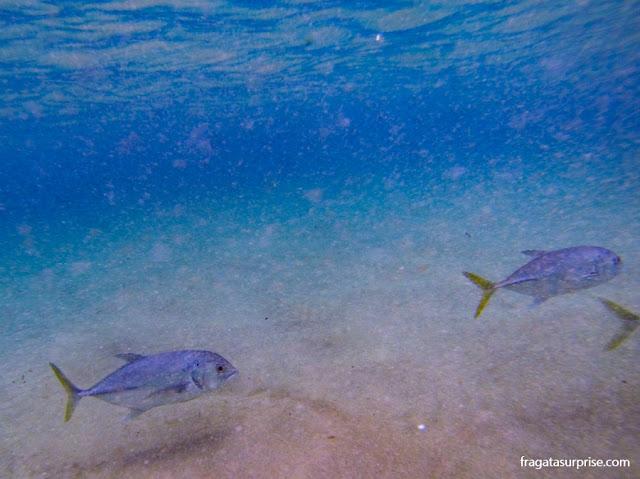 Mergulho na Baía dos Porcos, Fernando de Noronha
